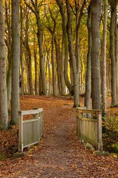 Der Gespensterwald Nienhagen im Herbst - Hochformat
