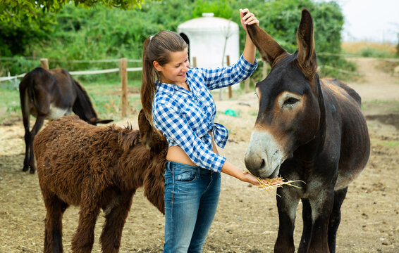 Portrait of positive young woman working on farm stall, looking after Catalan donkeys
