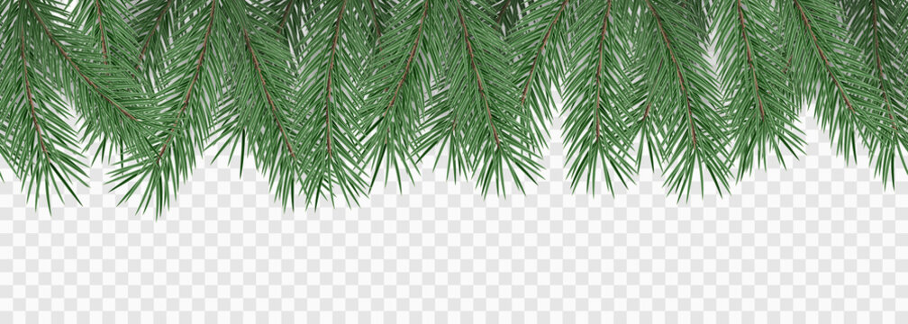 Fir branches on transparent background. Decorative christmas pattern or frame. Seamless vector illustration.