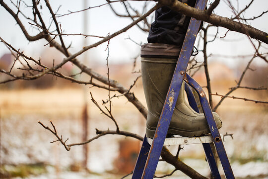 Caucasian woman gardener with garden tools, pruning fruit trees and bushes in the garden, seasonal work in the garden close-up.