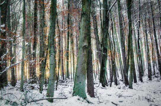 Bäume mit Schnee im Winter im Gegenlicht