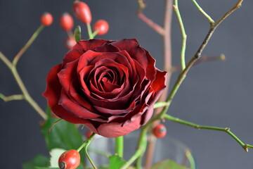 Obraz Rose and wild rose fruits red and dark background róża i owoce dzikiej róży w bukiecie - fototapety do salonu