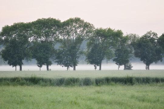 weißer Nebel steigt abends von den feuchten Wiesen in Neundorf auf