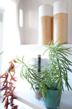 Pflanze in der Küche als Dekoration