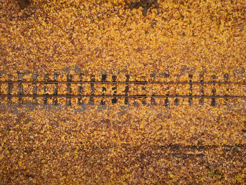 Aerial view with a drone of a railway in the autumn forest