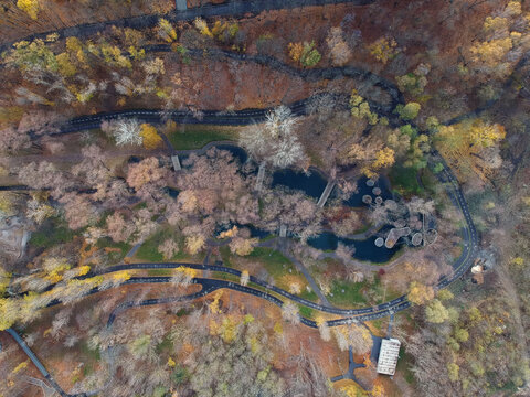 Road through the autumn forest, Aerial view