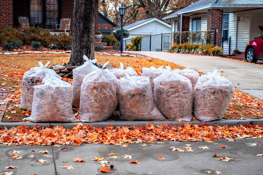 Rows of clear bags of Autumn leaves with more Maple leaves scatterd on yard and in street after a rain in residential neighborhood with car in neighboring drive and American flag reflected in french d