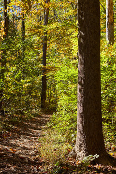 A wilderness trail in Nolde State Forest near Reading, Berks County, Pennsylvania, USA
