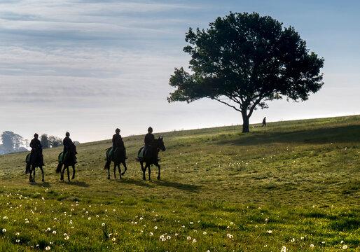 Europe, UK, England, Surrey, Epsom Downs race horses