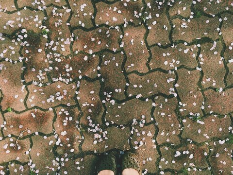 Cropped Image Of Woman Standing On Footpath With Cherry Blossom Petals