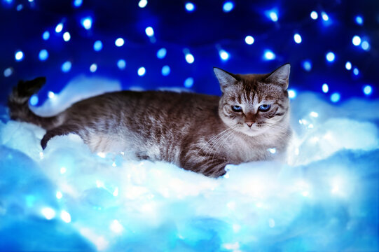 Tabby cat laying on the fluffy clouds against sky with star lights
