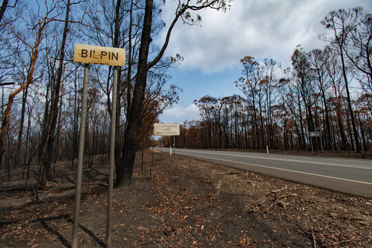 After the bushfire in Blue mountains, Bilpin, Australia.