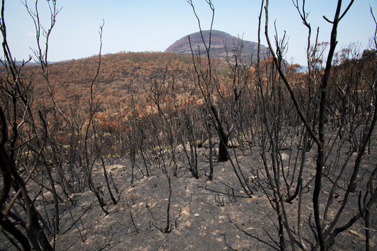 After the bushfire in Blue mountains, Mount Banks,