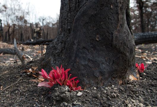 After the bushfire in Blue mountains, Australia.