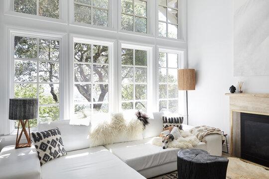 Whippet dog in modern design living room