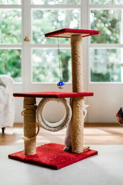 Cat standing on his back feet and hiding behind scratching post tower column