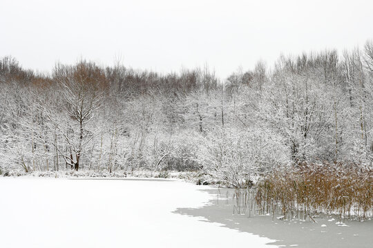 A frozen forest after a snowfall in winter on an iced pond.