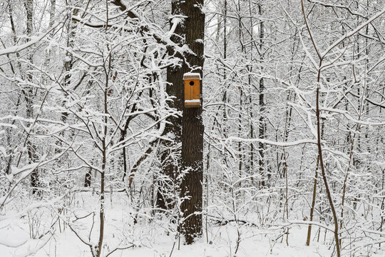 A wooden colored birdhouse during the winter with snow and everything froze. Snow and flat light, no shades.