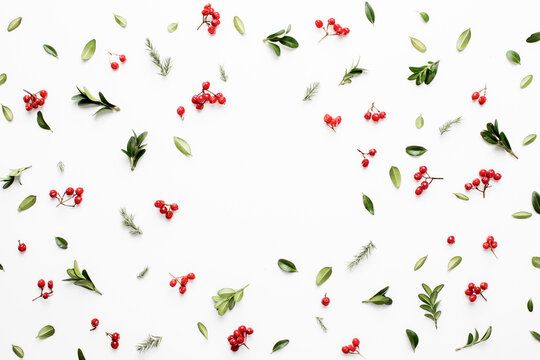 Christmas botanical natural background or template
