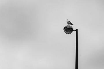 bird on the street lamp post Fotomurales