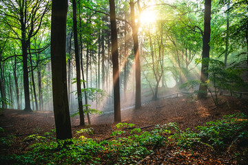 Wall Mural - Dramatic natural forest and sunbeams through fog in the morning.
