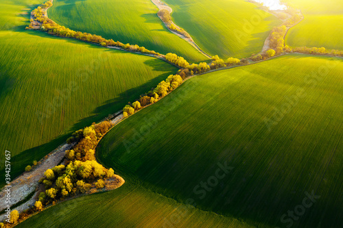 Wall mural Abstraction agricultural area and green wavy fields in sunny day. Aerial photography, top view drone shot.