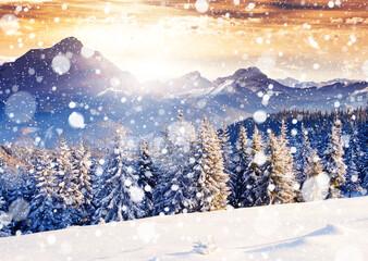 Wall Mural - Fantastic evening winter landscape.