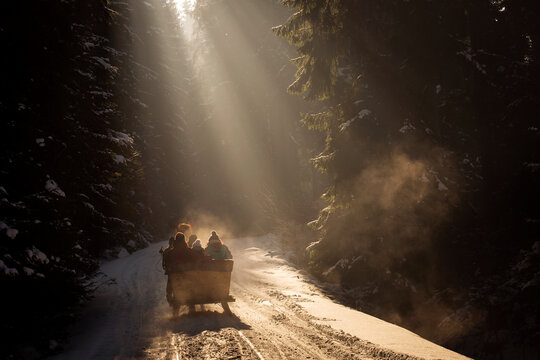 Silhouette People In Sleigh On Snow Covered Road Amidst Trees In Forest