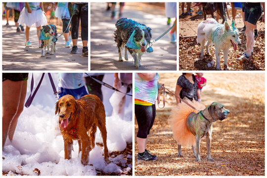 Dogs Covered In Colored Paint And Bubbles