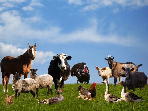 Lots of farm animals