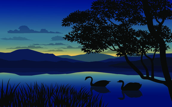 Sunset over lake with swans