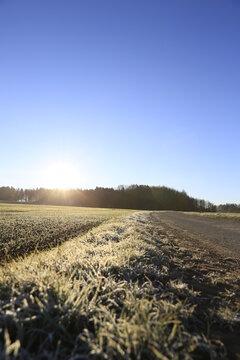 Wintermorgen am Feldrand Feldweg Frost