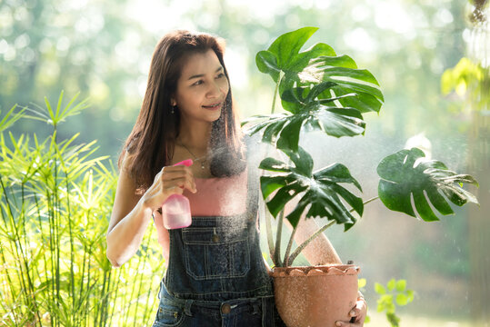 Young woman care plant monstera in garden. Asian people hobby and freelance gardening outdoor sunny nature background.