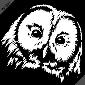 black and white linear paint draw owl vector illustration art