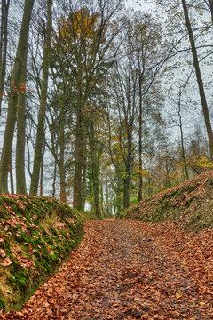 Schleifen-Wanderweg bei Velbert Neviges im Herbst