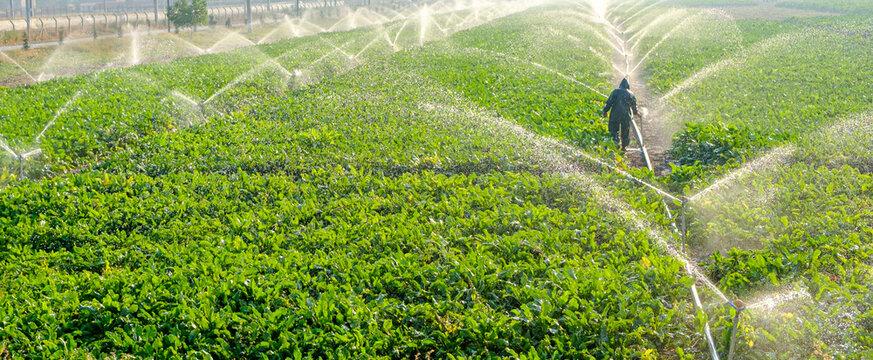 Sprinkler spraying fresh wet water on lush green field