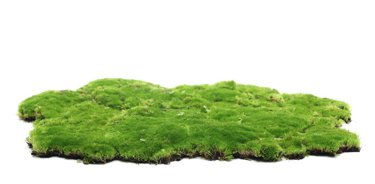 Green moss isolated on white background and texture