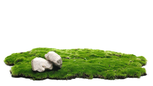 Green moss and rocks isolated on white background and texture
