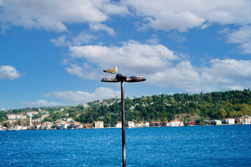 View of the sea And a seagull on street light Fotomurales