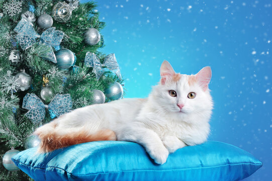 White cat laying on the blue pillow against decorated Christmas tree at the blue background