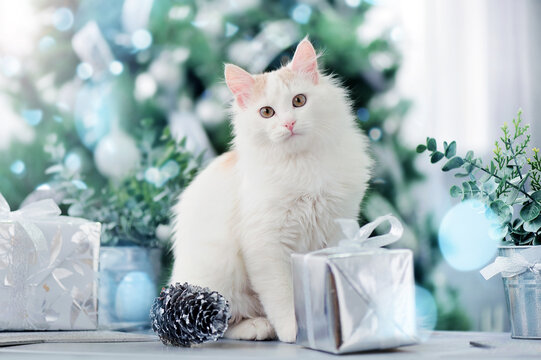 White cat sitting against decorated Christms tree next to the gift box