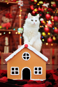 White long haired cat sitting on the gingerbread house against decorated Christmas tree