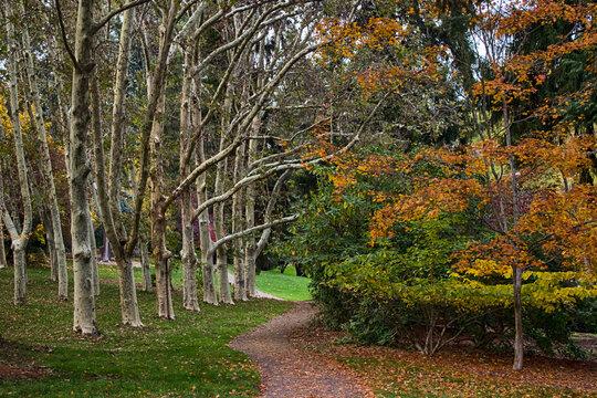 Autumn walk path in Lithia park, Ashland, Oregon