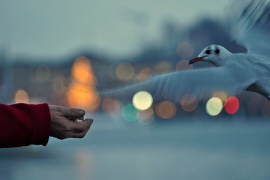 Blurred Motion Of Bird Flying By Human Hand During Sunset