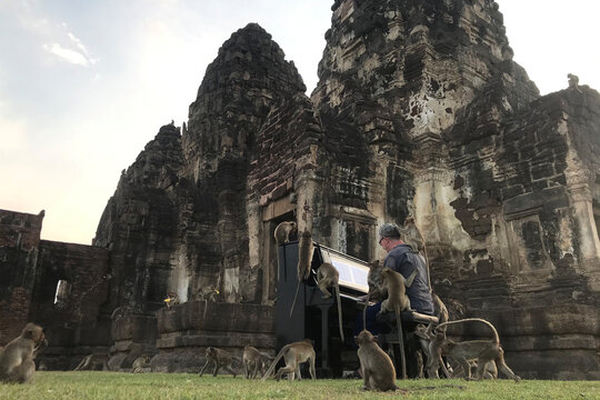 British musician Paul Barton plays the piano for monkeys that occupy abandoned historical areas in Lopburi