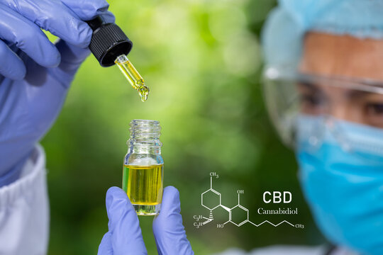 cbd hemp oil, formula CBD cannabidiol, doctor hand hold and offer to patient medical marijuana and oil., legal light drugs prescribe, alternative remedy or medication,medicine concept