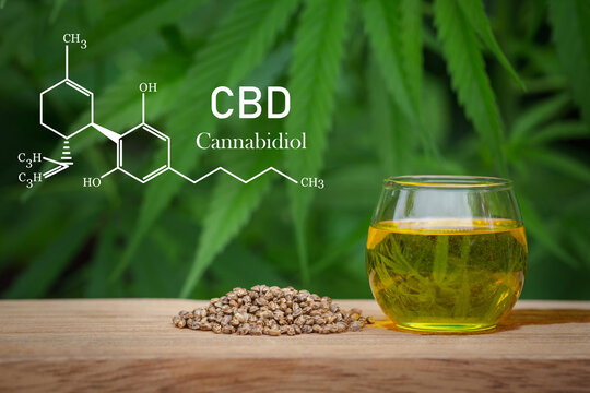 CBD elements in Cannabis,  hemp oil in a glass jar,  Concept of herbal alternative medicine.