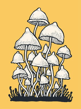 Psilocybin hallucinogenic magic mushrooms. Hand drawn design element. Engraving style. Vector illustration