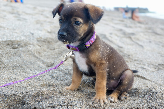 A portrait of a puppy at the beach in the afternoon in Bali