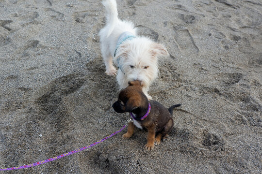 2 dogs on the beach playing together